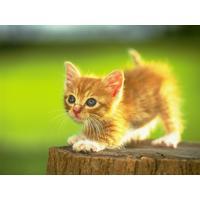 A Cat Named Tigger
