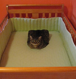 Cat in a Baby Crib