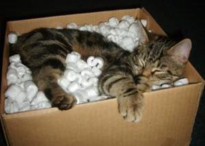 cat laying in packing material