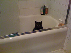 image cat in tub (added)