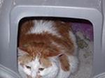Cat in liter box