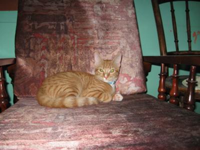 Bitey On her chair