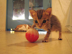 Cats Play With Food