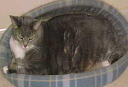 Black cat dandruff