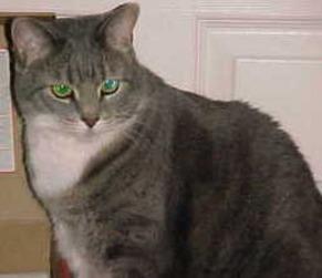 Happy Tabby Cat