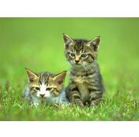 Commando Cats