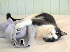 Cat beats up bath mats
