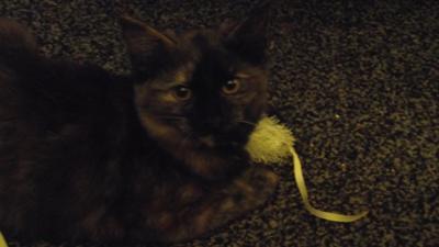 Misha Daughter Cat