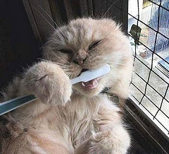 cat brushing his own teeth
