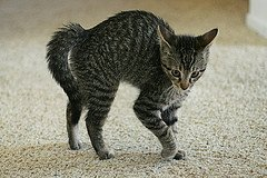 angry kitten image