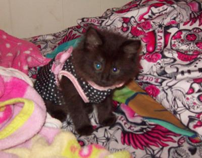 Little girl cat Sarafina