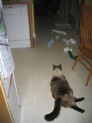 Cat dragging things