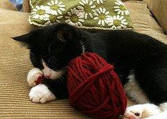 cats eat yarn