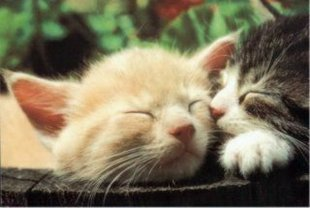 kittens naping