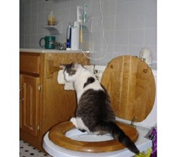 Toilet trained cat