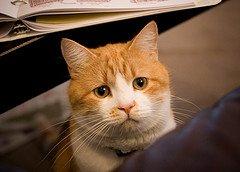 cat upset facial expression
