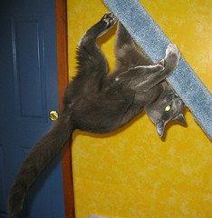 cat hanging upsidedown