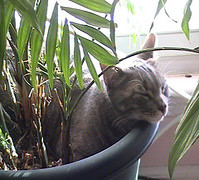 There are many different types of plants that are safe around pets. If you  have seen a certain plant that you like, the best thing to do is make note  of the ...
