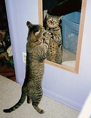cat scratches mirror
