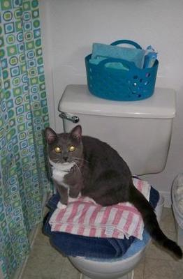 This is my cat Biggie in the bathroom LOL