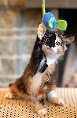 Entertaining a Cat