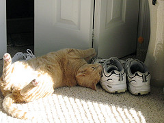 Cat rubbing sneakers