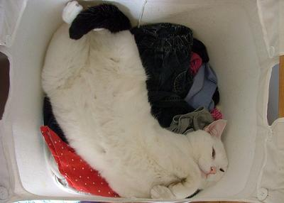 cat in wash image added