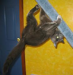 Scared cat behavior image
