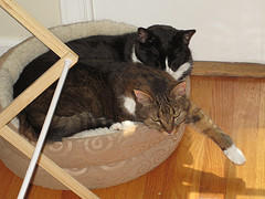 our cats nesting