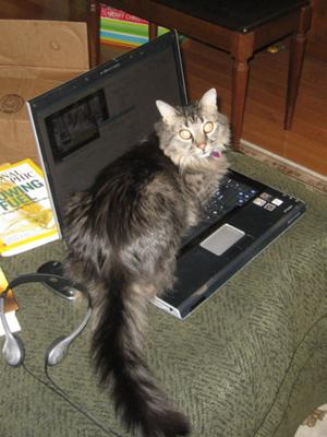 Cat uses computer