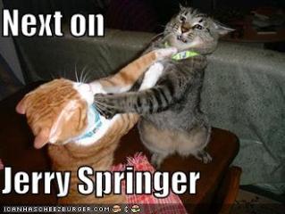 Spring Crazy Cats