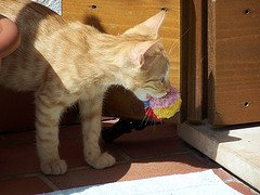 Cat carrying toys
