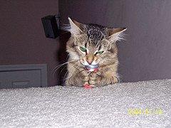 Goofy Cat Behavior