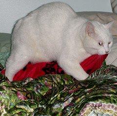 Cat Humps Blanket