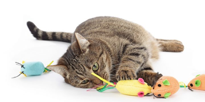 10 Fun Cat Toys That Your Cat Will Fall in Love With