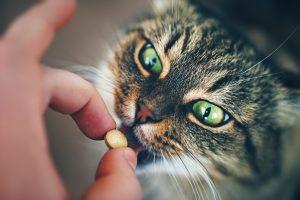 administer medication