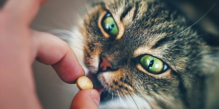 How To Effectively Administer Medication to Your Cat