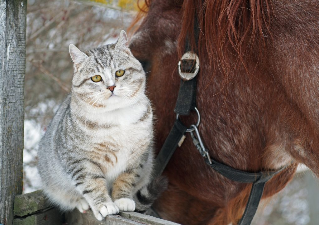cat and horse