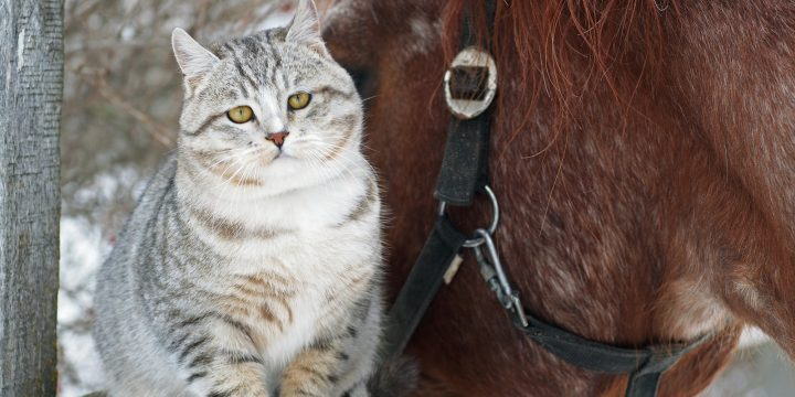 Cat and Horse: The Two Most Unlikely Friends Who Share an Incredible Bond