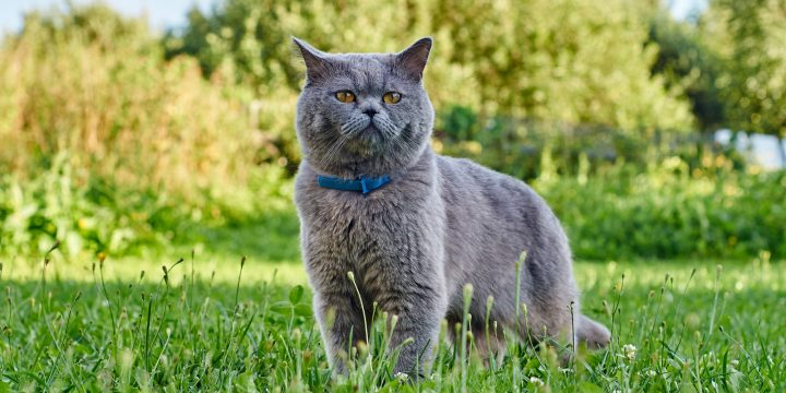 How to Choose a Collar That Your Cat Will Actually Love