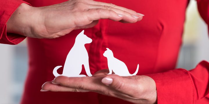 Is Pet Insurance Worth It? 5 Facts to Help You Decide