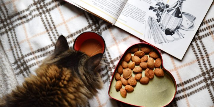 Miaow Chow: Your Guide to the Different Types of Cat Food