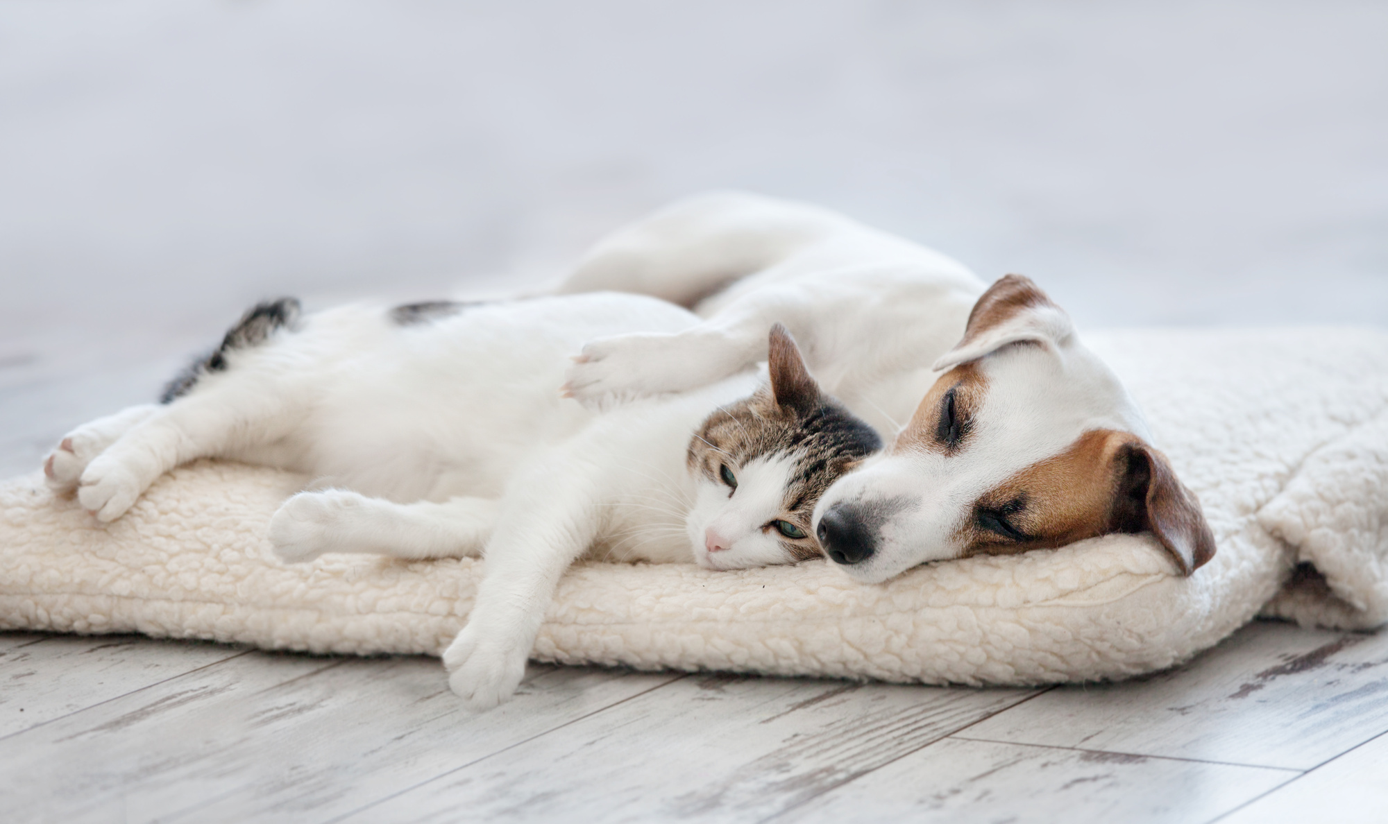 Pesky Pets: How to Make Cats and Dogs Get Along
