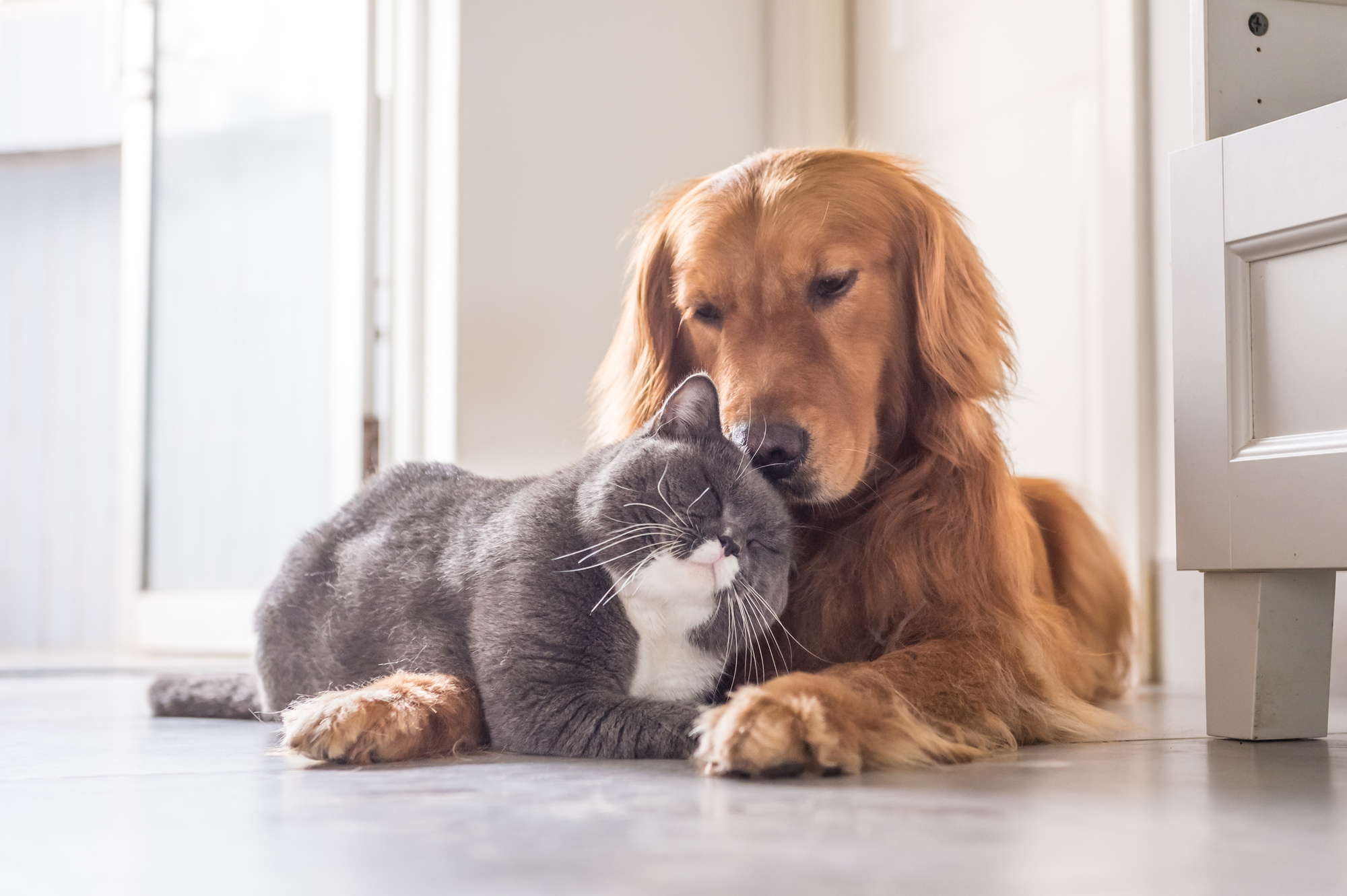 Playing Nice: Tips for Improving the Cat and Dog Relationship in Your Home