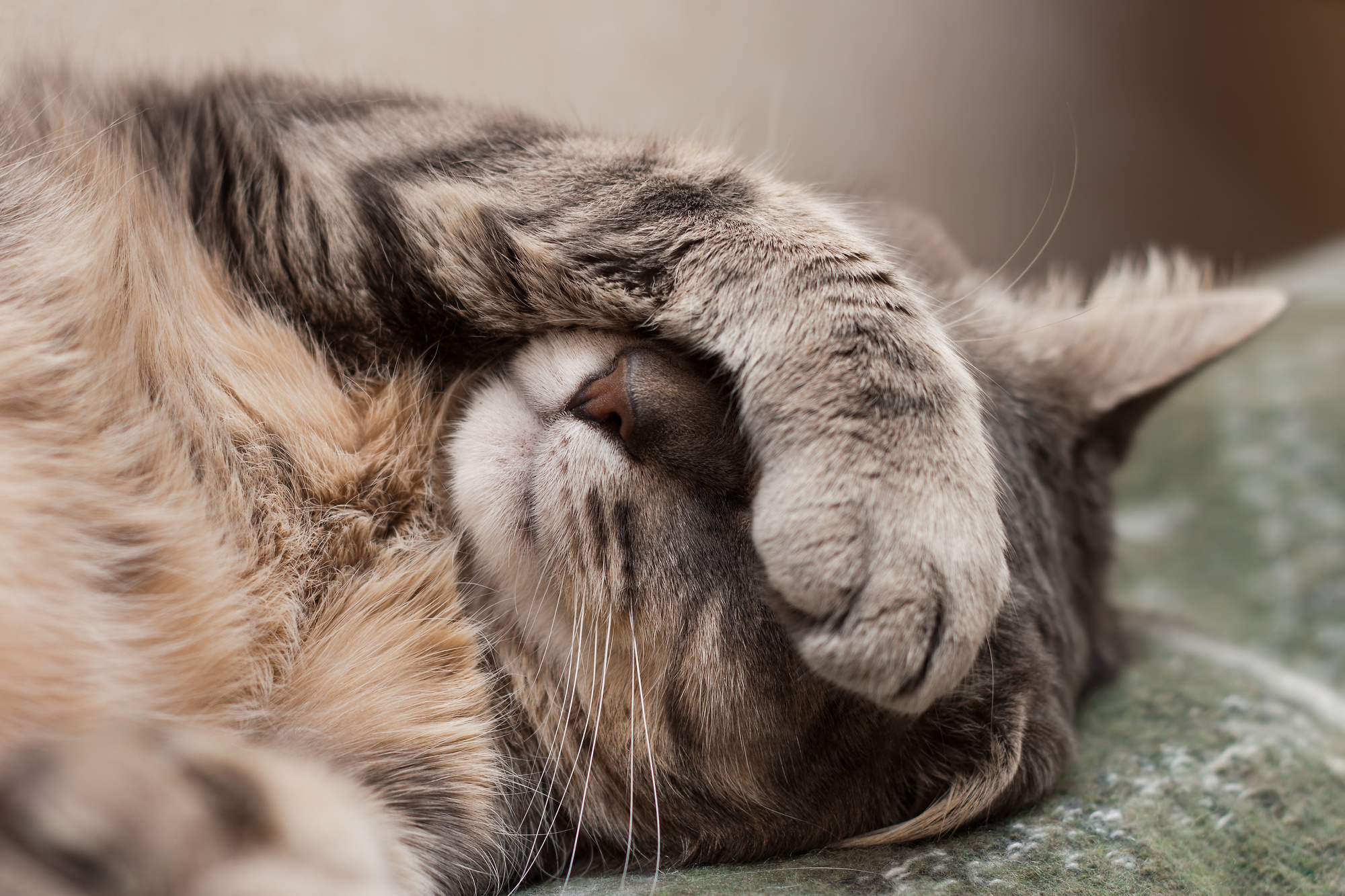 Does Your Pet Look a Little Peaked? 9 Signs That You've Got a Sick Cat
