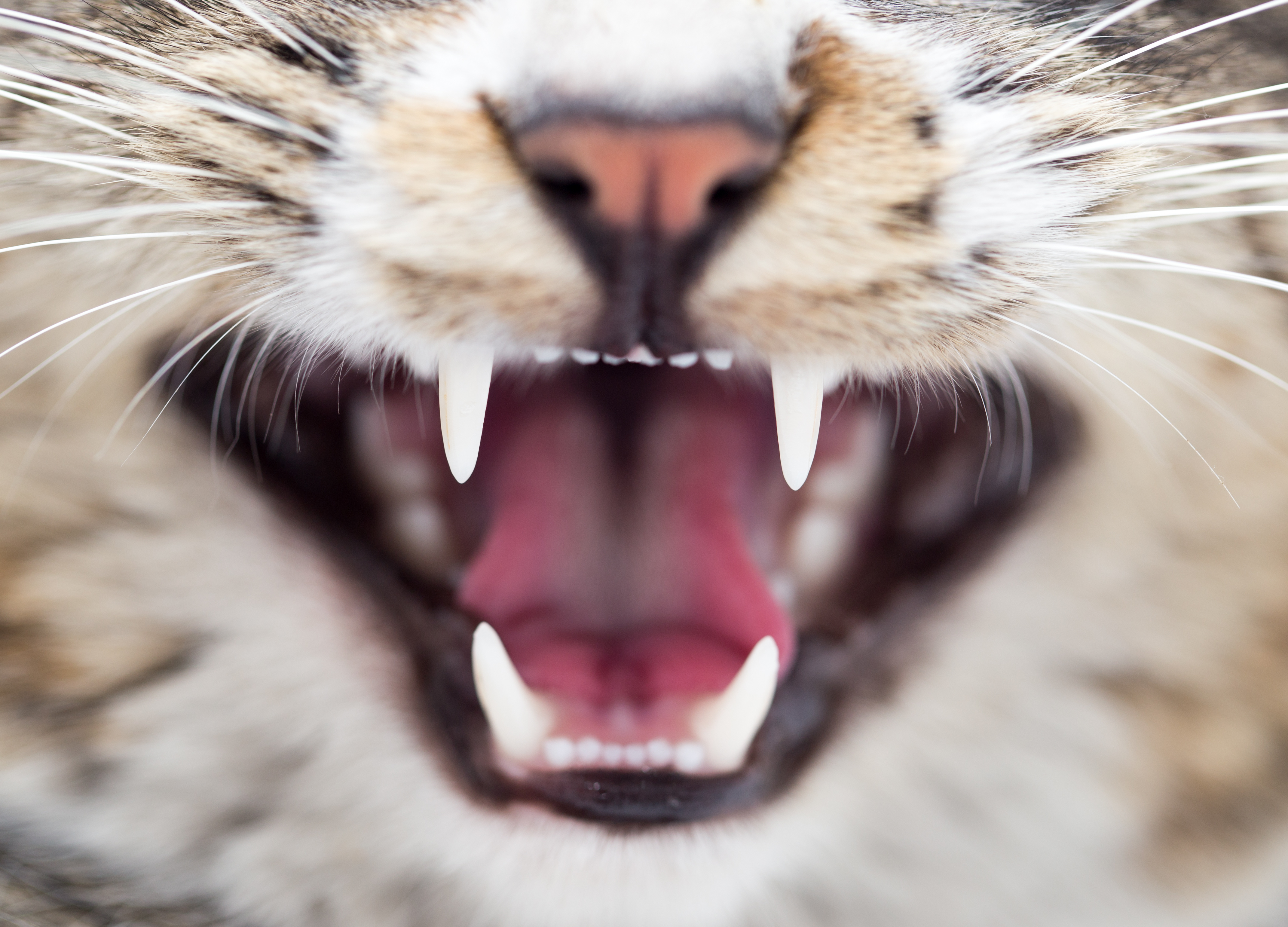 Make Your Kitty's Teeth Shine! 5 Must-Know Cat Dental Care Tips