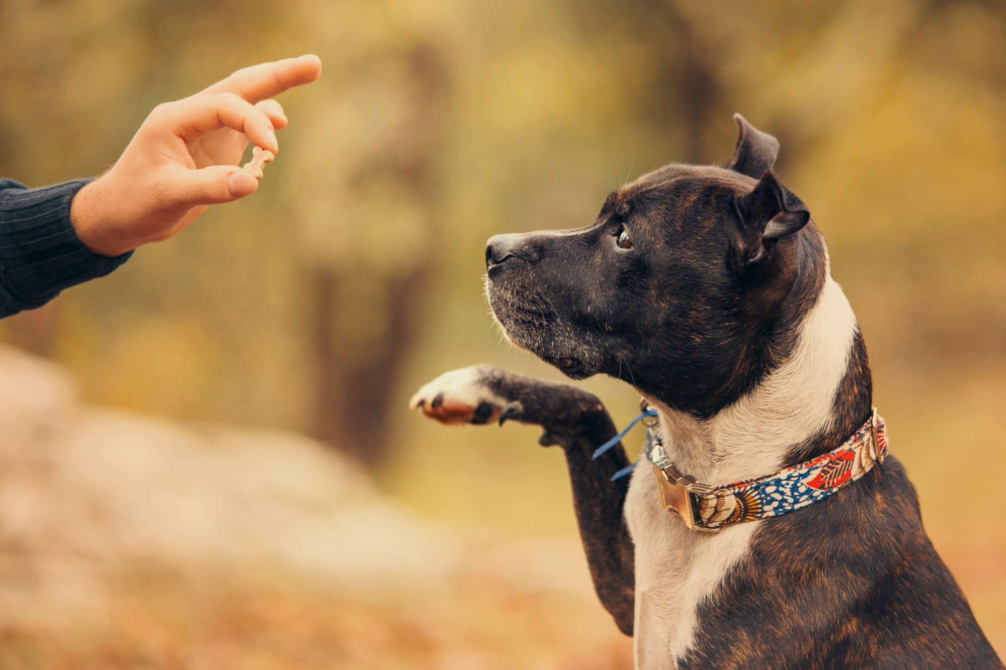 Picking for Your Pup: How to Choose the Best Collar for Dogs