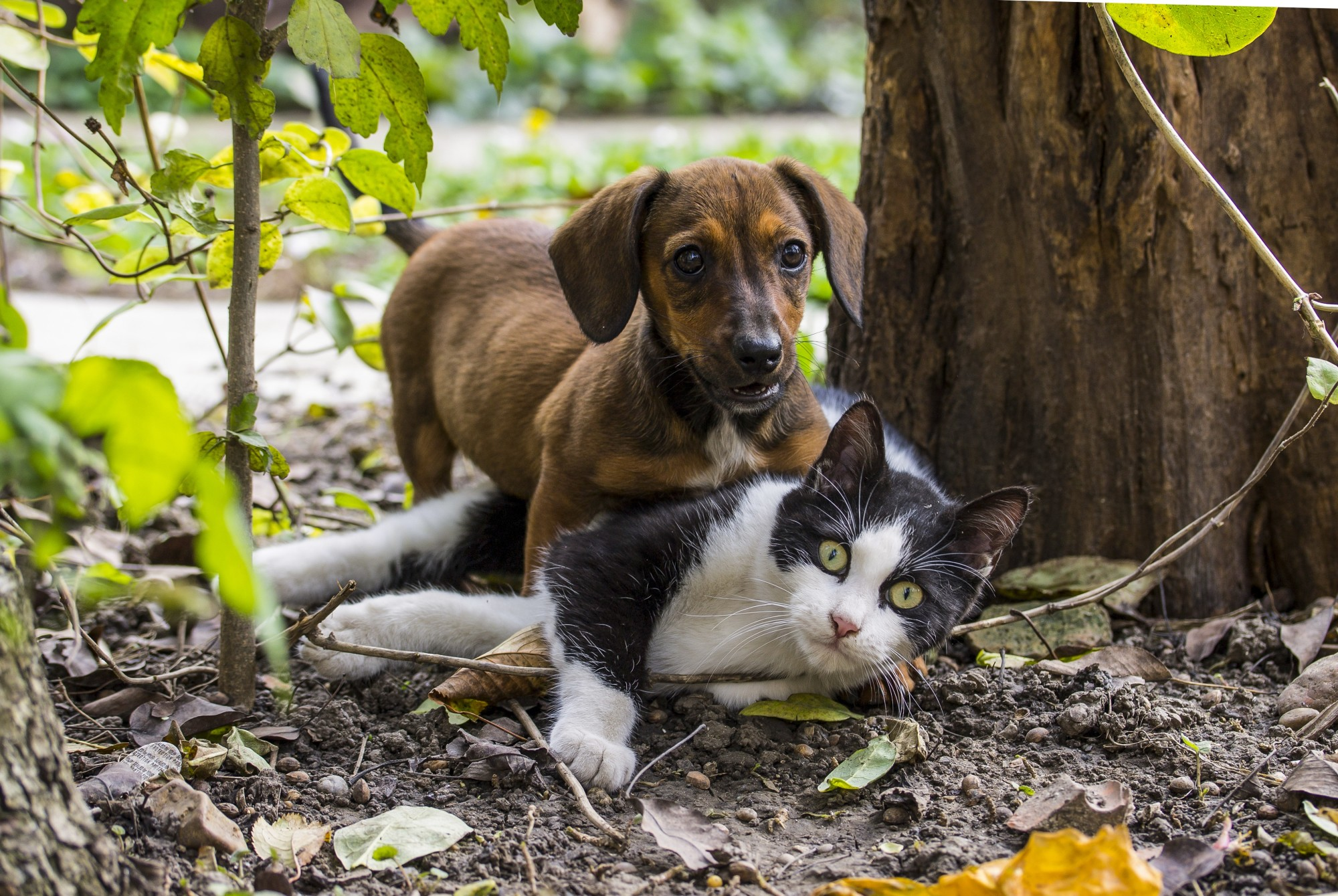 Dogs vs Cats: Which is right for you?