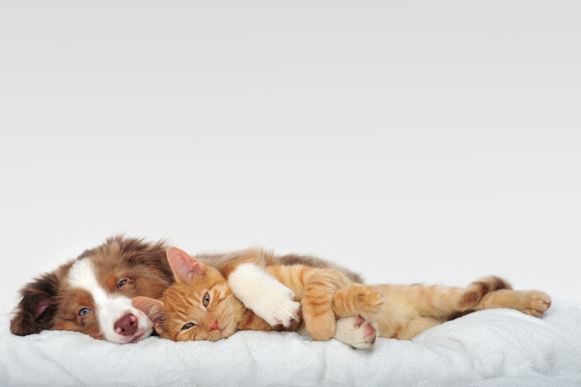 5 Dogs that are Cat-Friendly