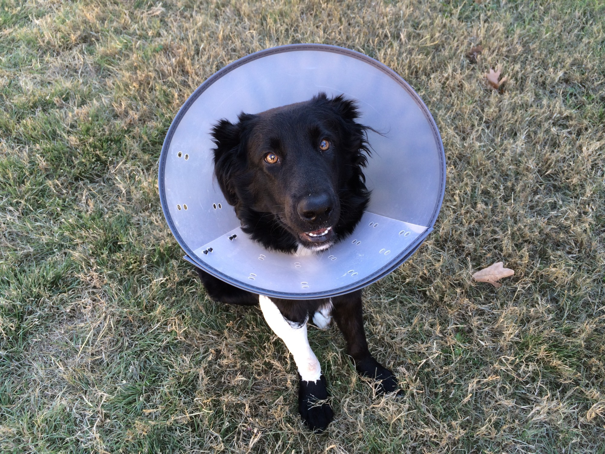 "5 Alternatives to the ""Cone of Shame"" for Your Furbaby"